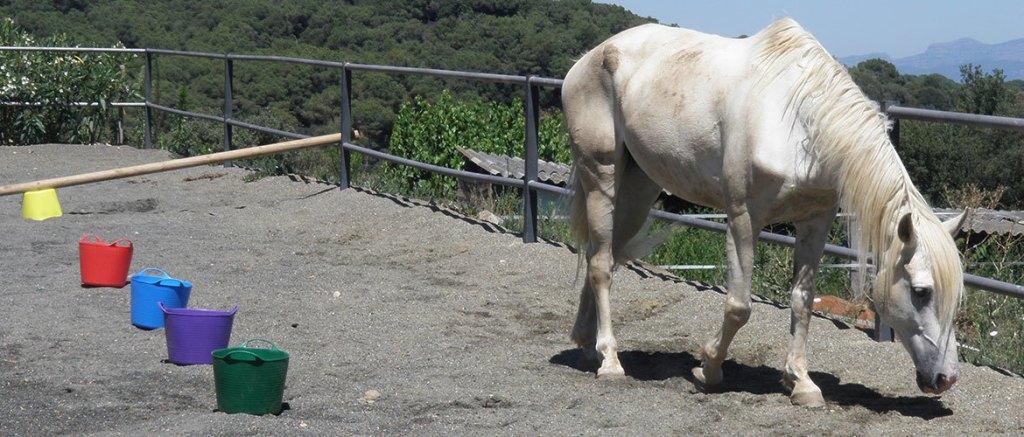 cavalls i educacio social (1)