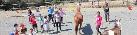 cavalls i educacio social (2)