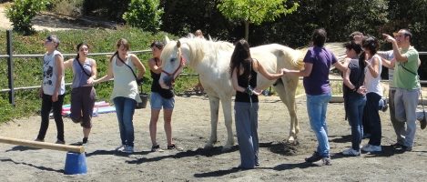 cavalls i educacio social